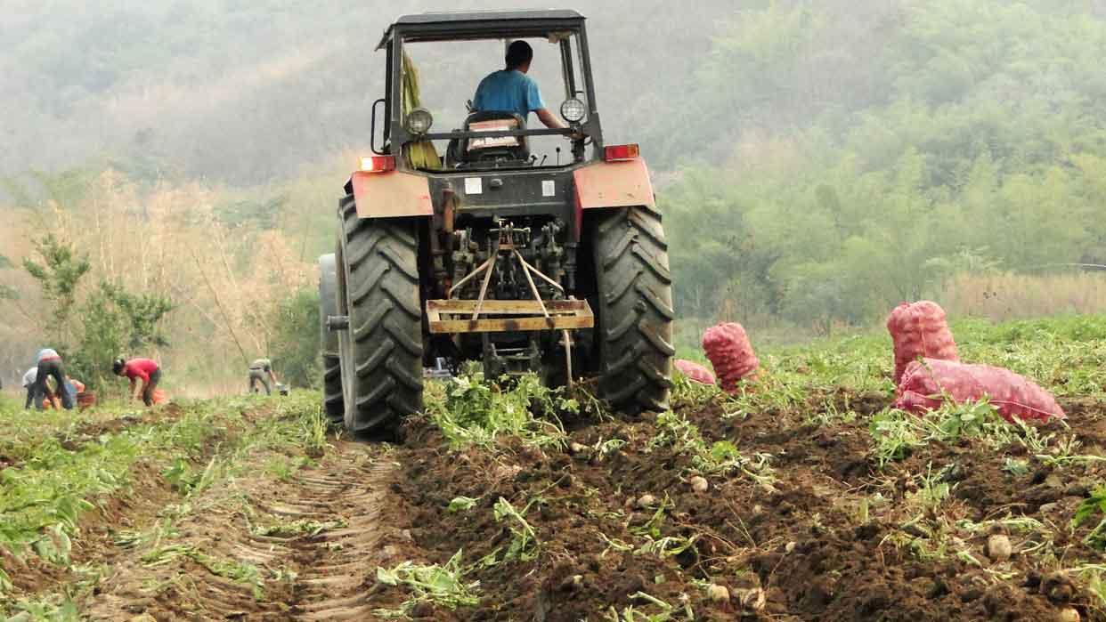 Creen que falta de inversión afecta al sector agrícola local