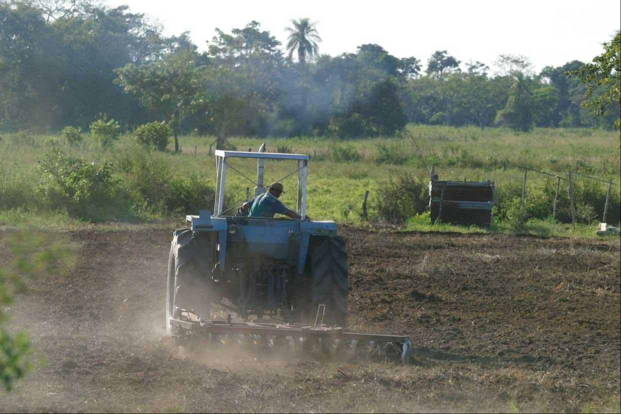FAO: precios de alimentos en el mundo bajaron al cierre del año pasado