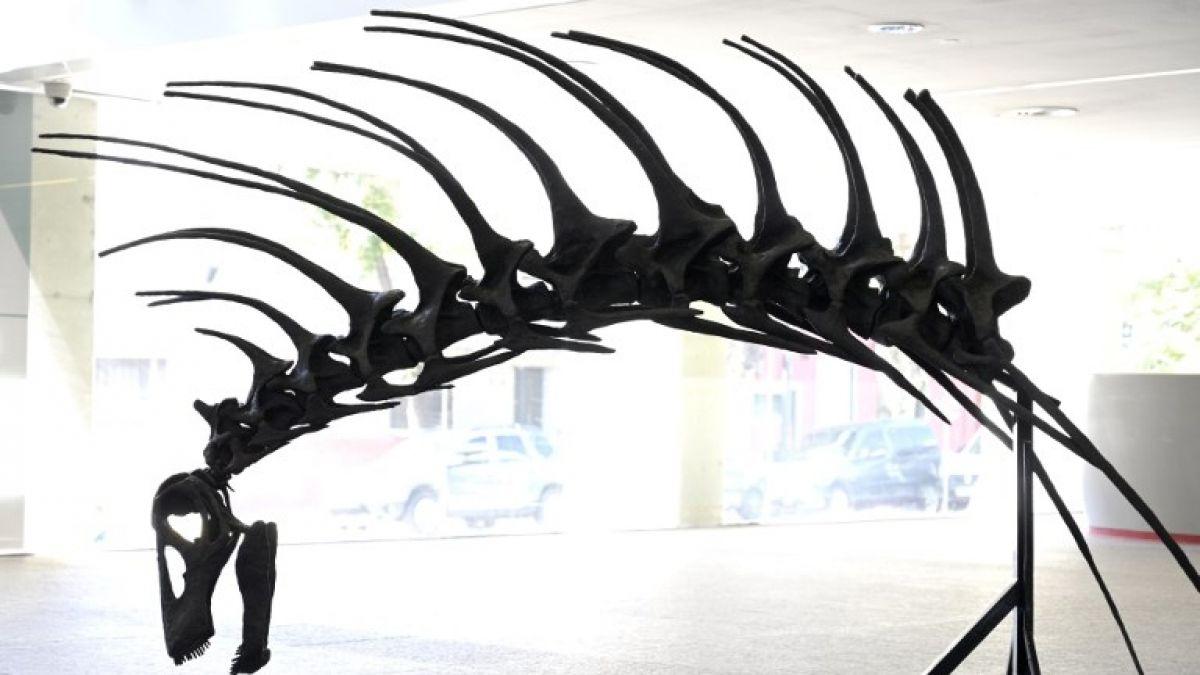 Hallan una nueva especie de dinosaurio  en Buenos Aires