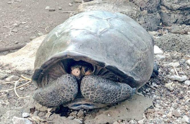 Hallan tortuga gigante considerada desaparecida