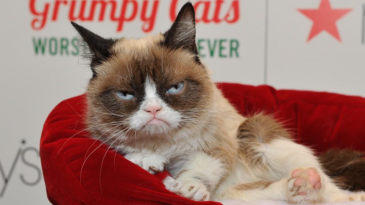 Fallece Grumpy, la famosa gata de los memes