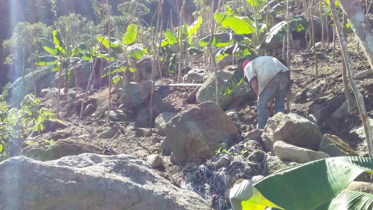 Productores de Carayaca advierten que cultivos podrían desaparecer por escasez de insumo
